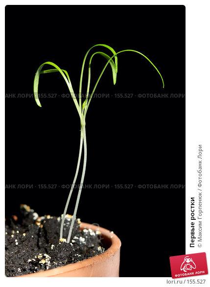 Купить «Первые ростки», фото № 155527, снято 14 марта 2007 г. (c) Максим Горпенюк / Фотобанк Лори