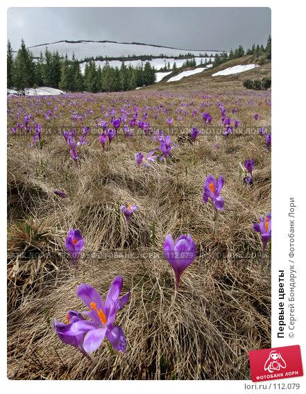 Первые цветы, фото № 112079, снято 12 мая 2007 г. (c) Сергей Бондарук / Фотобанк Лори