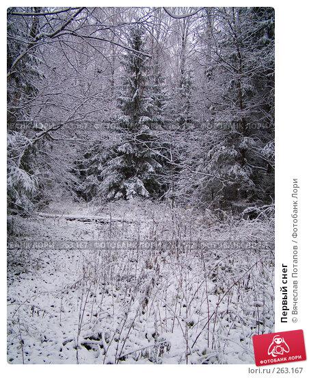 Первый снег, фото № 263167, снято 4 ноября 2007 г. (c) Вячеслав Потапов / Фотобанк Лори
