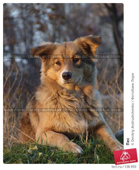 Пес, фото № 138955, снято 29 ноября 2007 г. (c) Dmitriy Andrushchenko / Фотобанк Лори