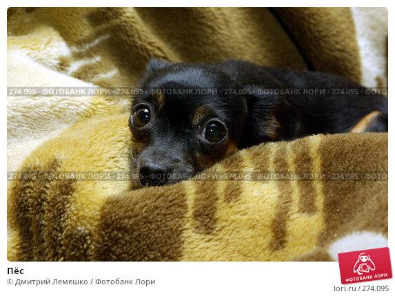 Пёс, фото № 274095, снято 27 февраля 2008 г. (c) Дмитрий Лемешко / Фотобанк Лори