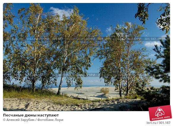 Купить «Песчаные дюны наступают», фото № 301187, снято 23 сентября 2007 г. (c) Алексей Зарубин / Фотобанк Лори