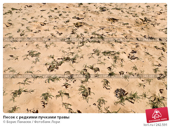 Песок с редкими пучками травы, фото № 242591, снято 29 марта 2008 г. (c) Борис Панасюк / Фотобанк Лори