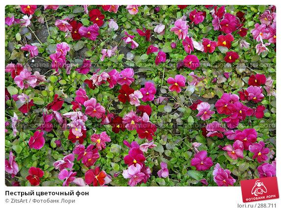 Пестрый цветочный фон, фото № 288711, снято 11 мая 2008 г. (c) ZitsArt / Фотобанк Лори