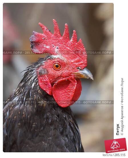 Купить «Петух», фото № 285115, снято 18 мая 2006 г. (c) Андрей Армягов / Фотобанк Лори