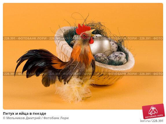 Петух и яйца в гнезде, фото № 228391, снято 9 марта 2008 г. (c) Мельников Дмитрий / Фотобанк Лори