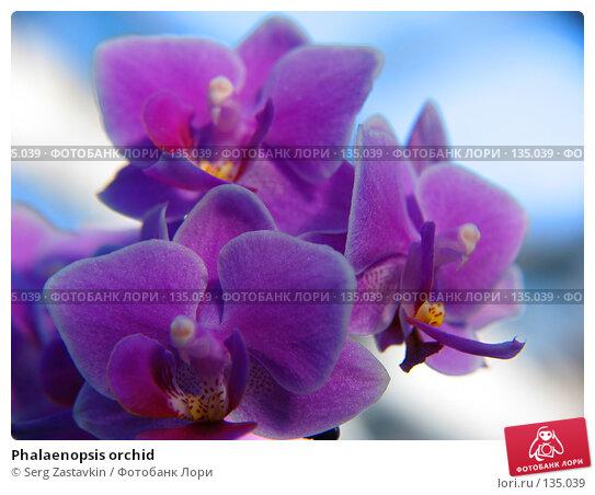 Phalaenopsis orchid, фото № 135039, снято 3 марта 2005 г. (c) Serg Zastavkin / Фотобанк Лори