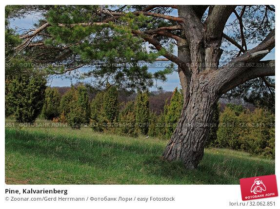 Pine, Kalvarienberg. Стоковое фото, фотограф Zoonar.com/Gerd Herrmann / easy Fotostock / Фотобанк Лори