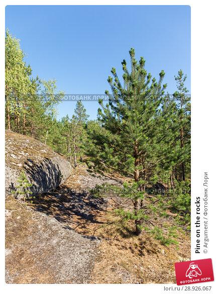 Купить «Pine on the rocks», фото № 28926067, снято 18 июля 2018 г. (c) Argument / Фотобанк Лори