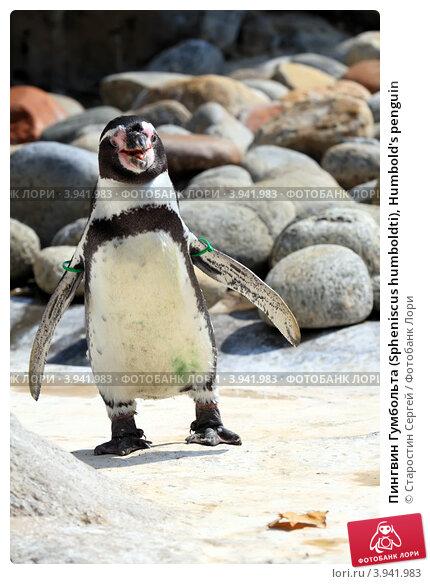 более что сарафаны пингвин фото зайки пиглет ручной