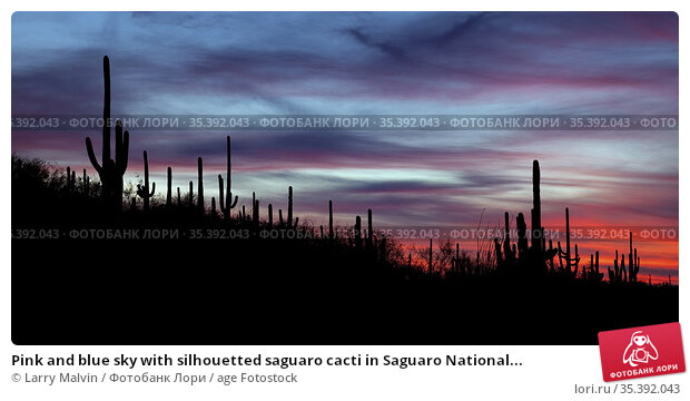 Pink and blue sky with silhouetted saguaro cacti in Saguaro National... Стоковое фото, фотограф Larry Malvin / age Fotostock / Фотобанк Лори
