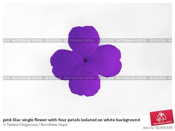 Купить «pink lilac single flower with four petals isolated on white background», фото № 32910519, снято 18 июня 2019 г. (c) Tetiana Chugunova / Фотобанк Лори