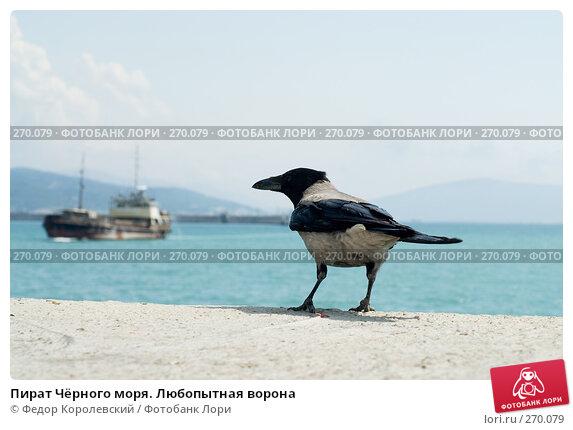 Пират Чёрного моря. Любопытная ворона, фото № 270079, снято 1 мая 2008 г. (c) Федор Королевский / Фотобанк Лори