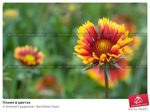 Пламя в цветах, фото № 59871, снято 4 июня 2007 г. (c) Алексей Судариков / Фотобанк Лори
