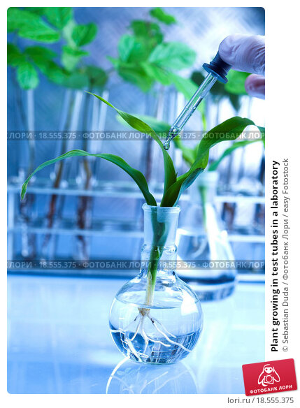 Купить «Plant growing in test tubes in a laboratory», фото № 18555375, снято 23 марта 2019 г. (c) easy Fotostock / Фотобанк Лори