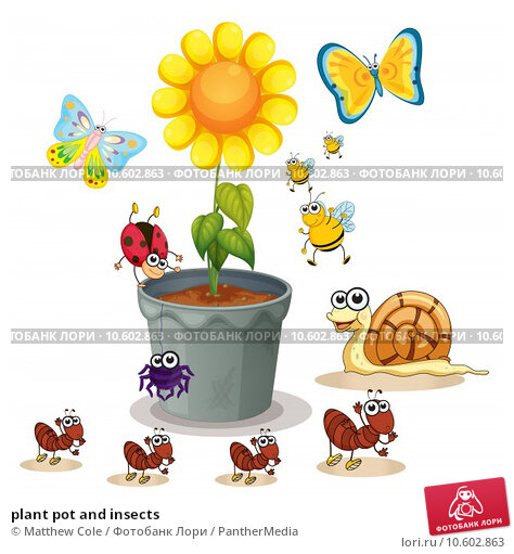 plant pot and insects. Стоковая иллюстрация, иллюстратор Matthew Cole / PantherMedia / Фотобанк Лори