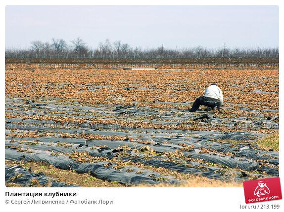 Плантация клубники, фото № 213199, снято 3 марта 2008 г. (c) Сергей Литвиненко / Фотобанк Лори