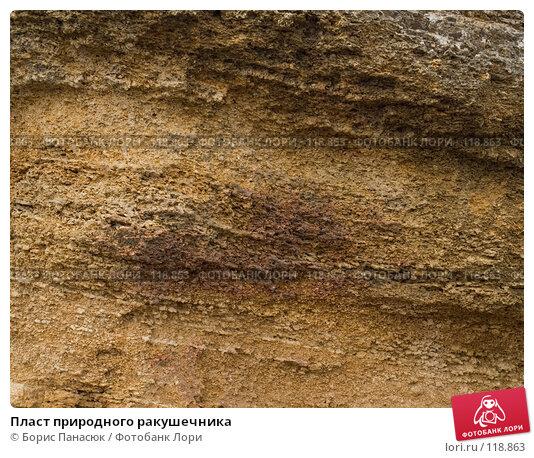 Пласт природного ракушечника, фото № 118863, снято 16 ноября 2007 г. (c) Борис Панасюк / Фотобанк Лори