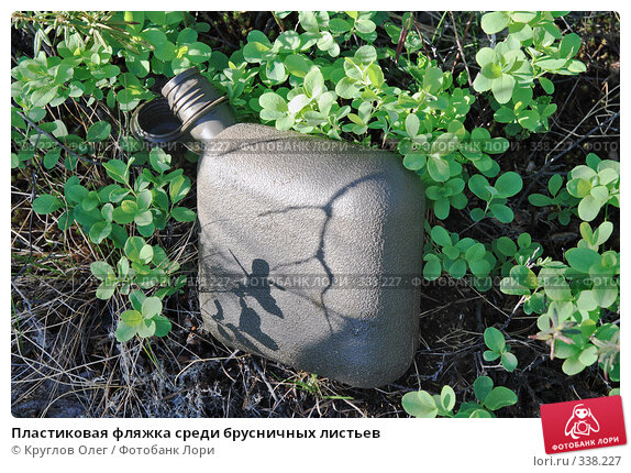 Пластиковая фляжка среди брусничных листьев, фото № 338227, снято 21 июня 2008 г. (c) Круглов Олег / Фотобанк Лори