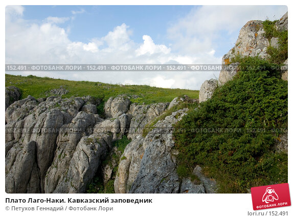 Плато Лаго-Наки. Кавказский заповедник, фото № 152491, снято 10 августа 2007 г. (c) Петухов Геннадий / Фотобанк Лори