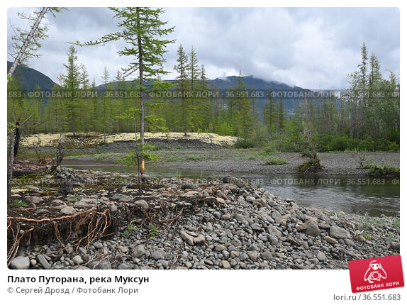 Плато Путорана, река Муксун. Стоковое фото, фотограф Сергей Дрозд / Фотобанк Лори