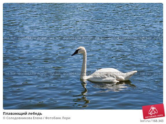 Плавающий лебедь, фото № 168343, снято 19 июля 2007 г. (c) Солодовникова Елена / Фотобанк Лори
