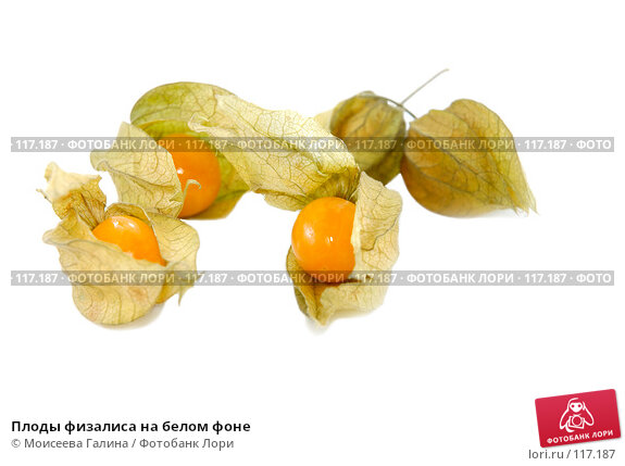 Плоды физалиса на белом фоне, фото № 117187, снято 14 октября 2007 г. (c) Моисеева Галина / Фотобанк Лори