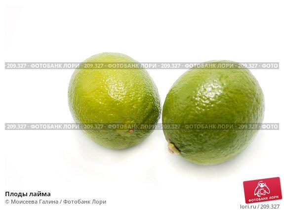 Купить «Плоды лайма», фото № 209327, снято 19 февраля 2008 г. (c) Моисеева Галина / Фотобанк Лори
