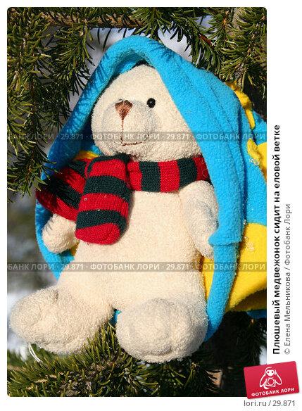 Плюшевый медвежонок сидит на еловой ветке, фото № 29871, снято 28 марта 2007 г. (c) Елена Мельникова / Фотобанк Лори