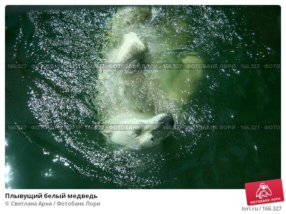 Плывущий белый медведь, фото № 166327, снято 11 июня 2007 г. (c) Светлана Архи / Фотобанк Лори