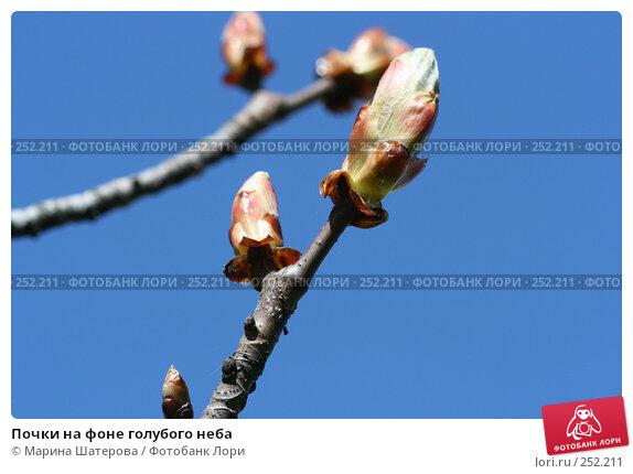 Почки на фоне голубого неба, фото № 252211, снято 28 апреля 2007 г. (c) Марина Шатерова / Фотобанк Лори