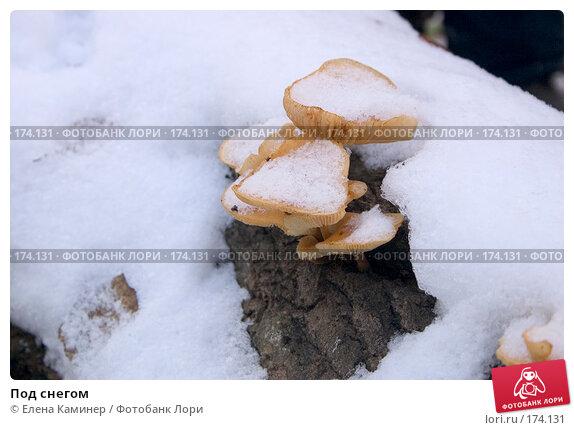 Купить «Под снегом», фото № 174131, снято 19 апреля 2018 г. (c) Елена Каминер / Фотобанк Лори