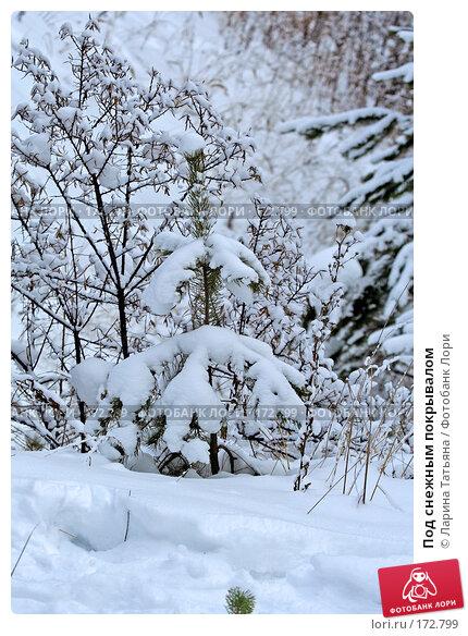 Под снежным покрывалом, фото № 172799, снято 1 января 2008 г. (c) Ларина Татьяна / Фотобанк Лори