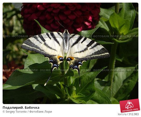 Купить «Подалирий. Бабочка», фото № 312983, снято 10 августа 2007 г. (c) Sergey Toronto / Фотобанк Лори