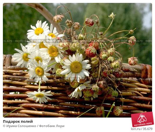 Подарок полей, фото № 35679, снято 23 июля 2006 г. (c) Ирина Солошенко / Фотобанк Лори