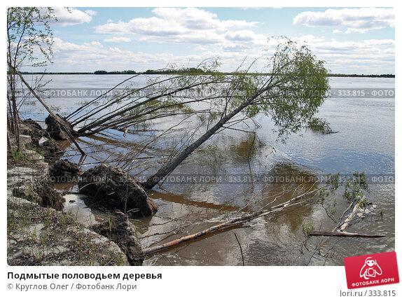 Подмытые половодьем деревья, фото № 333815, снято 5 июня 2008 г. (c) Круглов Олег / Фотобанк Лори