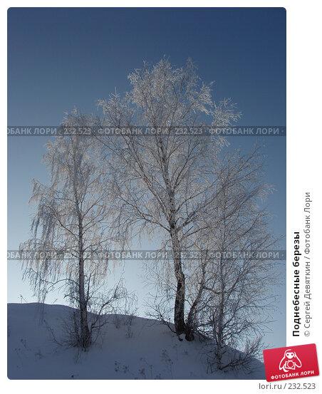 Купить «Поднебесные березы», фото № 232523, снято 8 февраля 2008 г. (c) Сергей Девяткин / Фотобанк Лори