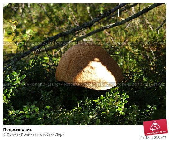 Подосиновик, фото № 238407, снято 17 августа 2006 г. (c) Примак Полина / Фотобанк Лори