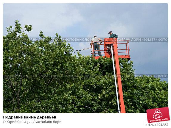 Подравнивание деревьев, фото № 194387, снято 19 июня 2007 г. (c) Юрий Синицын / Фотобанк Лори