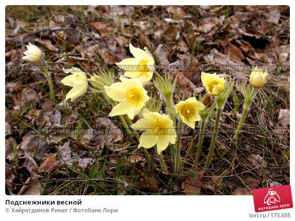 Подснежники весной, фото № 173655, снято 10 мая 2007 г. (c) Хайрятдинов Ринат / Фотобанк Лори