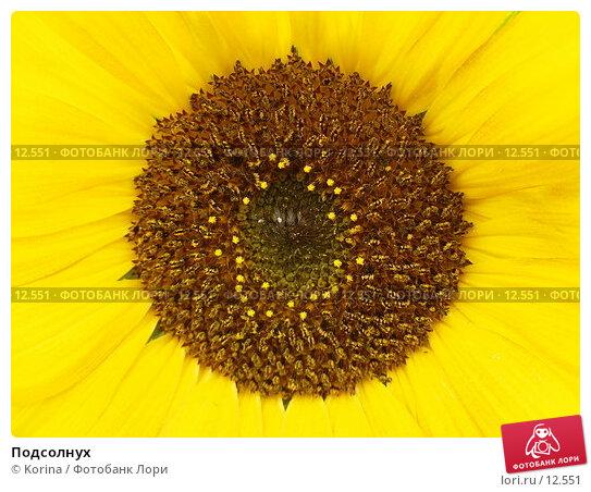 Подсолнух, фото № 12551, снято 29 июля 2006 г. (c) Korina / Фотобанк Лори