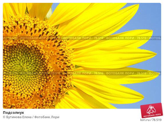 Подсолнух, фото № 78519, снято 20 августа 2007 г. (c) Бутинова Елена / Фотобанк Лори