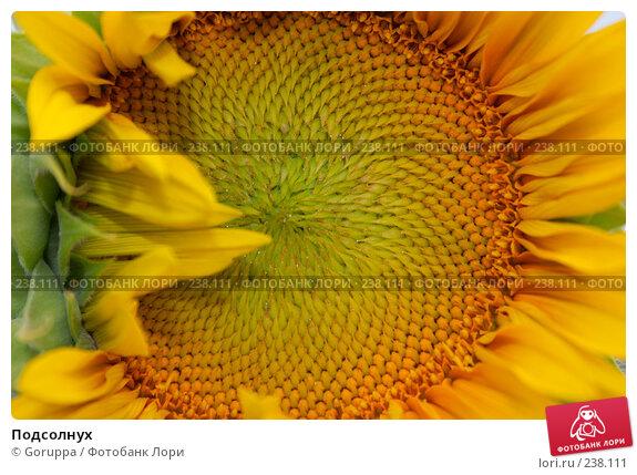 Подсолнух, фото № 238111, снято 28 июня 2007 г. (c) Goruppa / Фотобанк Лори