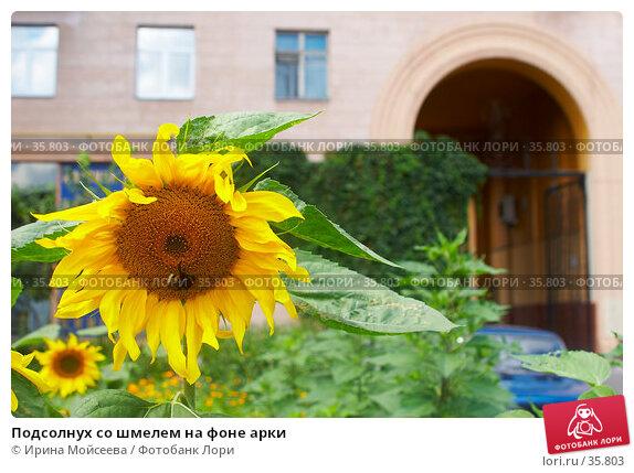 Подсолнух со шмелем на фоне арки, эксклюзивное фото № 35803, снято 17 августа 2006 г. (c) Ирина Мойсеева / Фотобанк Лори