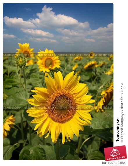 Купить «Подсолнухи», фото № 112083, снято 17 августа 2007 г. (c) Сергей Бондарук / Фотобанк Лори
