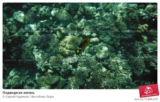 Подводная жизнь. Стоковое фото, фотограф Сергей Чуриков / Фотобанк Лори