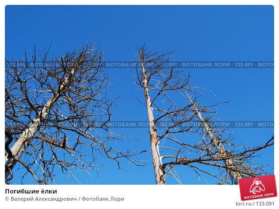 Погибшие ёлки, фото № 133091, снято 20 сентября 2007 г. (c) Валерий Александрович / Фотобанк Лори