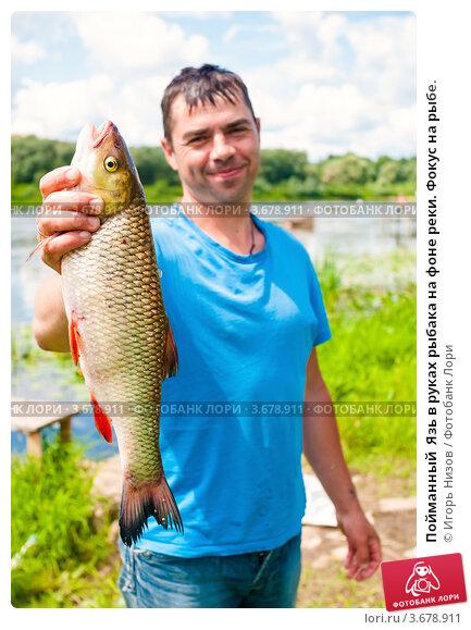 Купить «Пойманный  Язь в руках рыбака на фоне реки. Фокус на рыбе.», эксклюзивное фото № 3678911, снято 18 июля 2012 г. (c) Игорь Низов / Фотобанк Лори