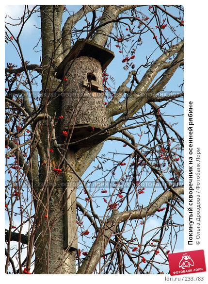 Покинутый скворечник на осенней рябине, фото № 233783, снято 28 сентября 2005 г. (c) Ольга Дроздова / Фотобанк Лори