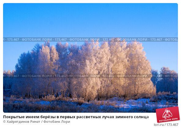 Покрытые инеем берёзы в первых рассветных лучах зимнего солнца, фото № 173467, снято 7 января 2008 г. (c) Хайрятдинов Ринат / Фотобанк Лори